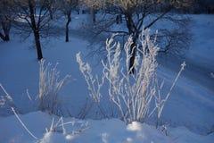 Hoarfrost auf verwelktem Gras, am 19. Januar 2013 Uppsala, Schweden Stockfotos