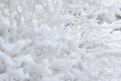 Hoarfrost auf Zweigen Stockbilder