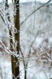 Hoarfrost auf Zweigen Lizenzfreies Stockfoto