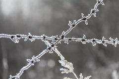 Hoarfrost on a barbwire Royalty Free Stock Image