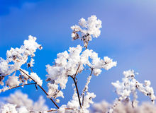 Hoarfrost on the branch of bush as a cluster on a background sky Royalty Free Stock Photography
