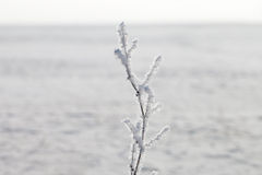 Hoarfrost. Royalty Free Stock Photography