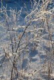 Hoarfrost on branches Stock Photography