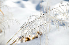 Hoarfrost on branches of herbs Stock Image