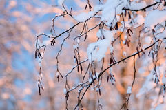 Hoarfrost on branches macro. Stock Photos