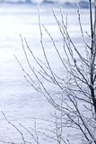 Hoarfrost. Branches of trees. Stock Photo