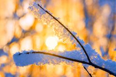 Hoarfrost on the Branches of Trees in the Rays of Royalty Free Stock Photos
