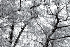 Hoarfrost on branches Stock Images