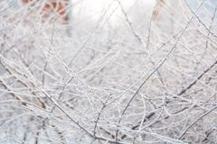 Hoarfrost on the bush. The bush froze in winter. Winter bush in the forest. Frost on the bush Royalty Free Stock Images