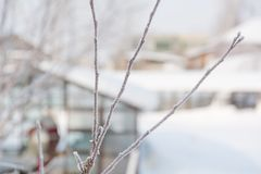 Hoarfrost on the bush. The bush froze in winter. Winter bush in the forest. Frost on the bush Stock Images