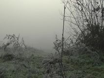 Hoarfrost on bushes in the fog, with sun on the horizon. stock footage