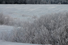 Hoarfrost on Bushes Near Field Royalty Free Stock Photography