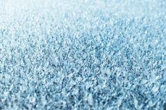 Hoarfrost Royalty Free Stock Photography