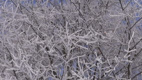 Hoarfrost covered branches stock video