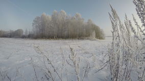 Hoarfrost covered landscape with trees, time lapse 4K. Hoarfrost covered landscape with trees and grass stalks on sunny misty winters morning, time lapse 4K stock video footage