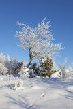 Hoarfrost covered tree Royalty Free Stock Photography
