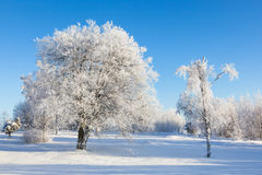 Hoarfrost covered trees Royalty Free Stock Photos