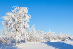 Hoarfrost covered trees Stock Image