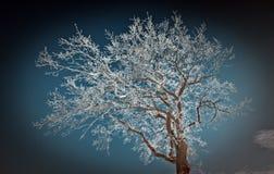 Hoarfrost di alba fotografie stock libere da diritti
