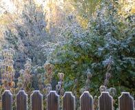 Hoarfrost di mattina di autunno Fotografia Stock Libera da Diritti