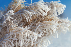Hoarfrost. Royalty Free Stock Images