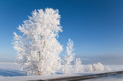 Hoarfrost em árvores. foto de stock royalty free