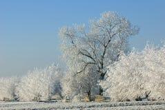 Hoarfrost em árvores do inverno Fotos de Stock Royalty Free