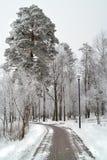 Hoarfrost em árvores no inverno. fotografia de stock royalty free