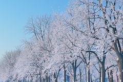 Frosted Forest Royalty Free Stock Photos