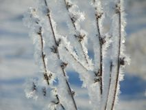 Hoarfrost formed on field grass in FingerLakes royalty free stock photo