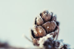 Hoarfrost on the fir cone Royalty Free Stock Images