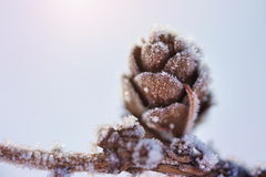 Hoarfrost on the fir cone. Macro image Royalty Free Stock Photos