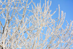Hoarfrost. Frost. Blue sky. Royalty Free Stock Image