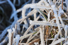 Hoarfrost grass Royalty Free Stock Photos