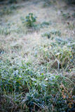 Hoarfrost on grass Royalty Free Stock Photography