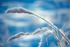 Hoarfrost on grass Stock Photos
