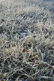 Hoarfrost on grass Royalty Free Stock Photos