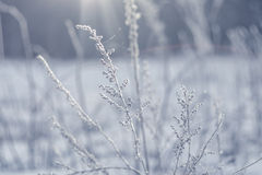 Hoarfrost on the grass Royalty Free Stock Images