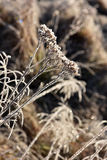 Hoarfrost on grass. Rime on grass on a cold winter morning Stock Images