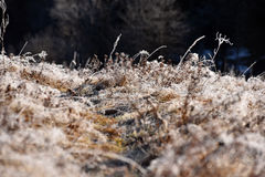 Hoarfrost on grass Royalty Free Stock Images