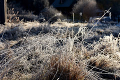Hoarfrost on grass. Rime on grass on a cold winter morning Stock Photo