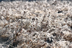 Hoarfrost on grass. Rime on grass on a cold winter morning Royalty Free Stock Photo
