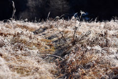 Hoarfrost on grass. Rime on grass on a cold winter morning Royalty Free Stock Images