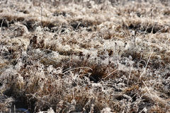Hoarfrost on grass. Rime on grass on a cold winter morning Royalty Free Stock Photos