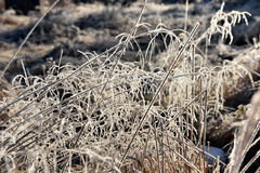 Hoarfrost on grass. Rime on grass on a cold winter morning Stock Photos