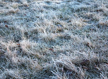 Hoarfrost on the grass Stock Images