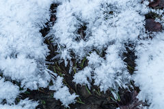 Hoarfrost on a ground. Crystalline hoarfrost on a leaves and grass Stock Images