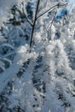Hoarfrost ice formation on tree branches closeup stock images