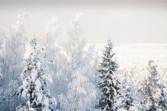 Hoarfrost. Kõrvemaa Bog, Estonia Royalty Free Stock Photos