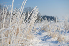 Hoarfrost landscape. Hoarfrost in morning landscape Stock Photos